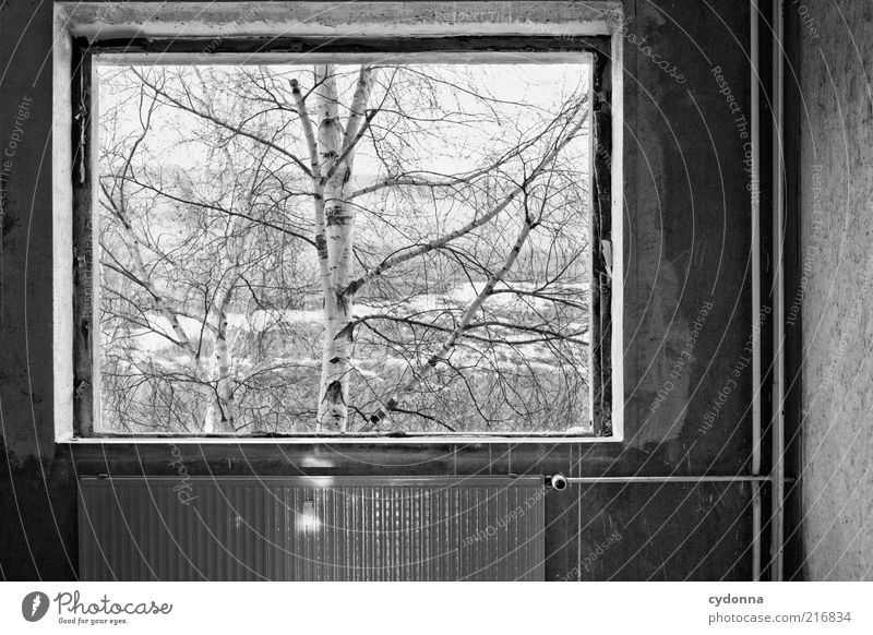 Picture in picture Calm Living or residing Nature Winter Tree Wall (barrier) Wall (building) Window Esthetic Loneliness Idea Cold Life Perspective Stagnating