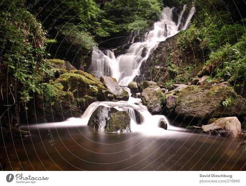 Killarney waterfalls II Nature Landscape Plant Water Spring Summer Tree Moss Foliage plant Forest Rock Lake Brook River Waterfall Brown Green Long exposure Flow