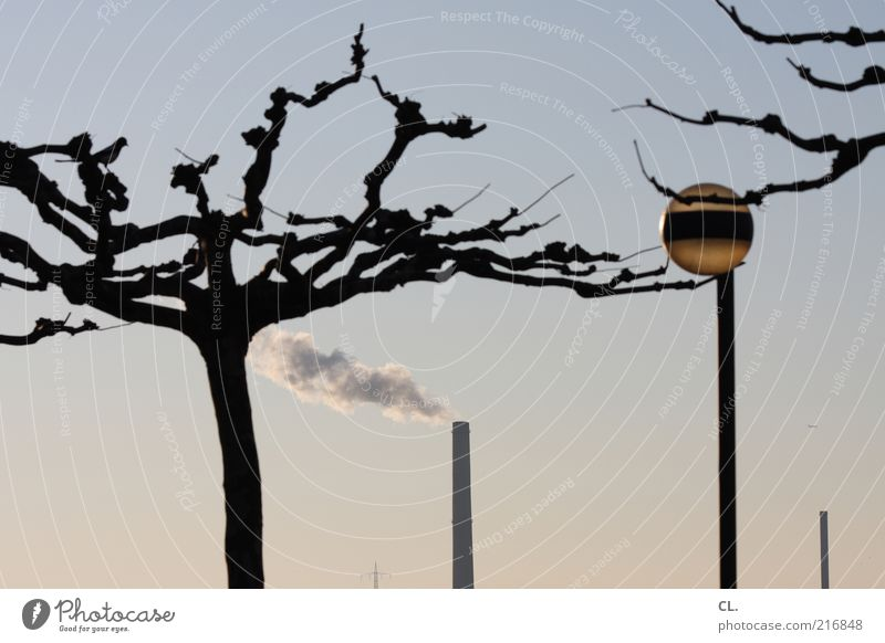 On the Rhine Environment Nature Landscape Air Sky Cloudless sky Climate Weather Beautiful weather Tree Tower Chimney Environmental pollution Lamp Smoke Lantern