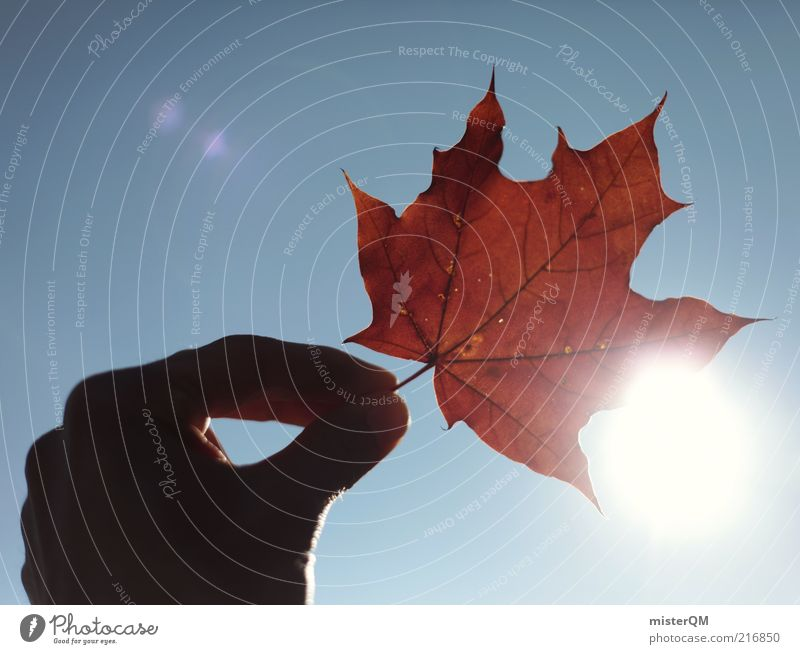 Nature Hand Sun Red Joy Leaf Autumn Freedom Contentment Lighting Fingers Happiness Esthetic Infancy To hold on