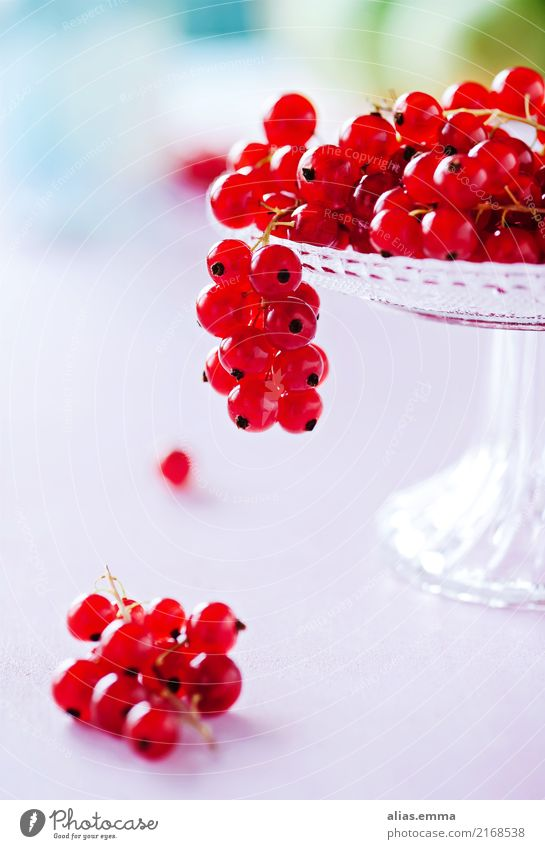 Red Currants Food Fruit Berries Nutrition Vegetarian diet Diet Fresh Juicy Sweet Pink Turquoise Colour photo Interior shot Close-up Detail