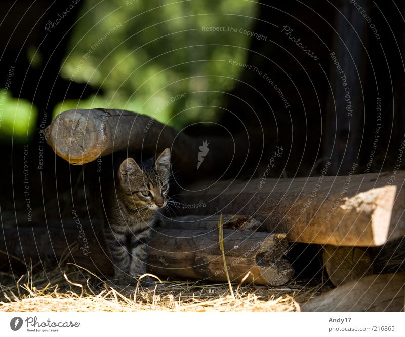 outlook Animal Pet Cat 1 Wood Stand Free Natural Curiosity Cute Beautiful Colour photo Exterior shot Deserted Morning Contrast Shallow depth of field Forward