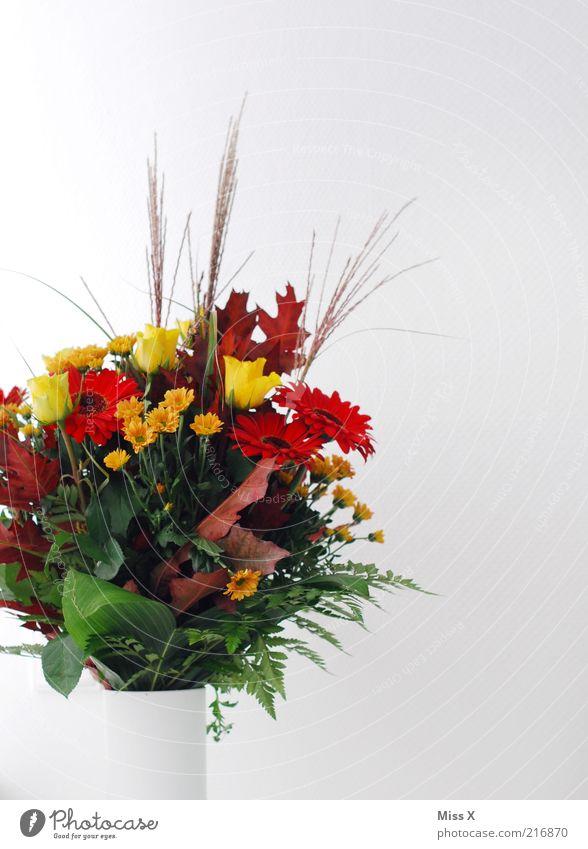 Beautiful Plant Flower Leaf Blossom Rose Decoration Blossoming Bouquet Fragrance Flower vase