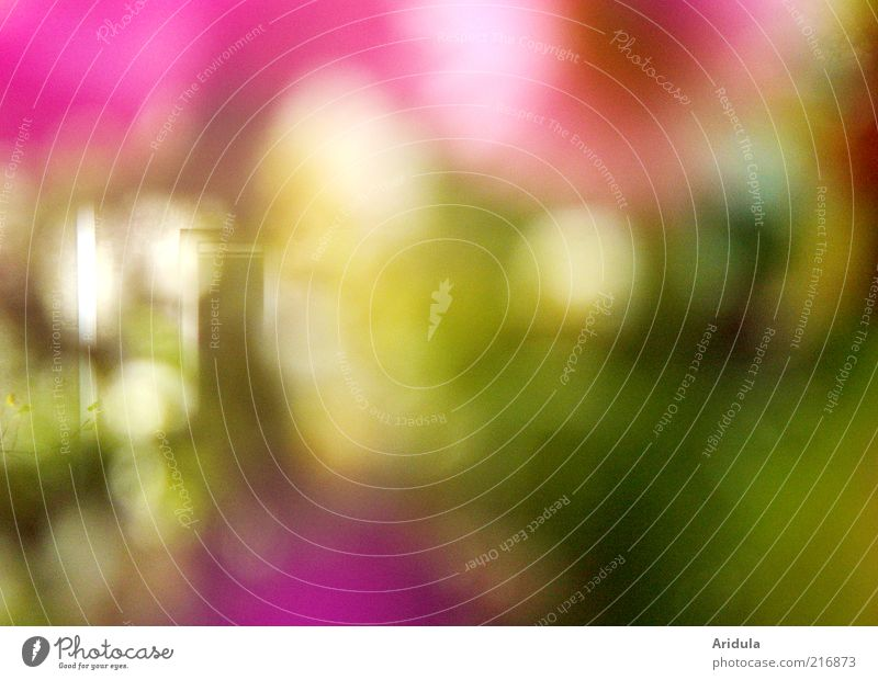 there at the window Nature Plant Flower Window Blossoming Multicoloured Pink Mysterious Vista Exterior shot Blur Violet Abstract Background picture Copy Space