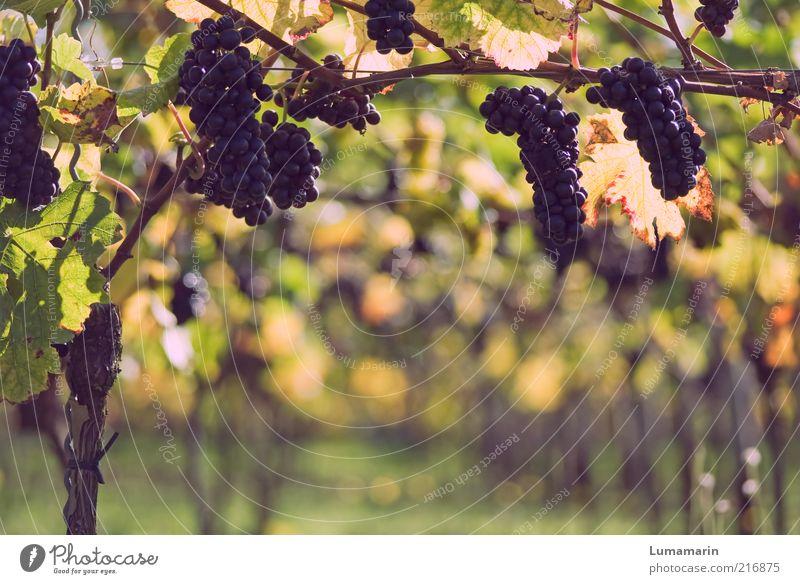 Nature Beautiful Plant Autumn Bright Field Food Environment Fruit Fresh Arrangement Esthetic Sweet Growth Vine Natural