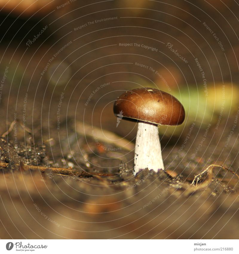 Cheer up Lonely Mushroom! | Be Awesome. Earth Loneliness Small Brown Plant Nature Autumn Blur Diminutive Edible Inedible Poison Mushroom cap Unhealthy Summer