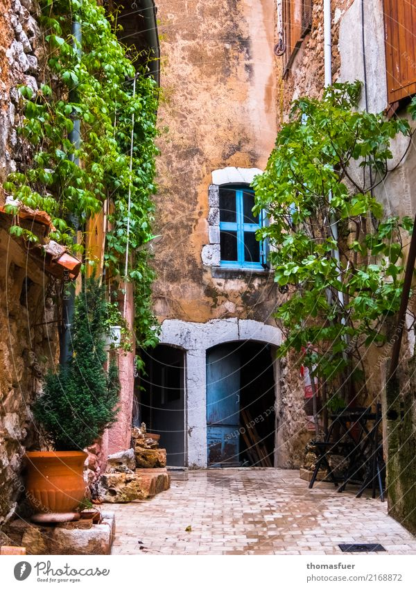 old house, climbing plants, window, door Living or residing House (Residential Structure) Spring Beautiful weather Warmth Plant Flower Ivy Foliage plant