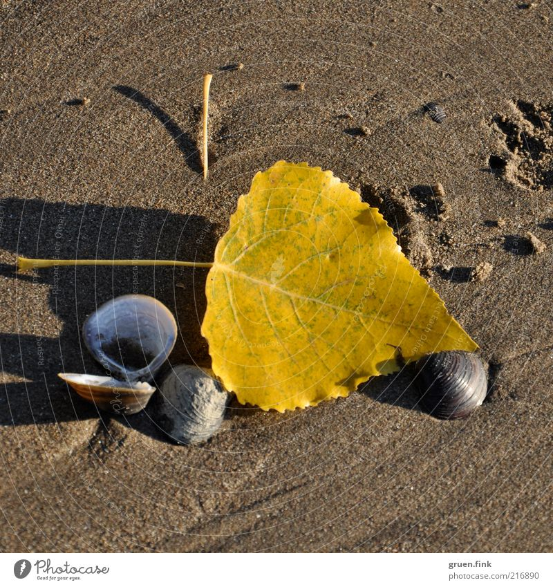 Autumn on the beach too! Environment Nature Landscape Earth Sand Beautiful weather Leaf River bank Beach Mussel Animal tracks Esthetic Glittering Natural Brown