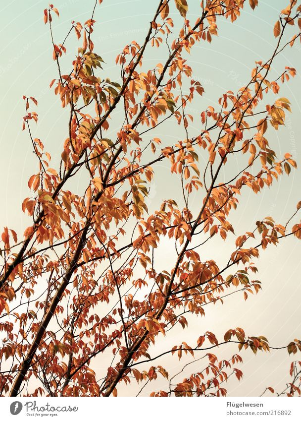 Tree Plant Leaf Autumn Spring Bushes Seasons Beautiful weather Blue sky November Autumn leaves October Deciduous tree Twigs and branches Nature Autumnal