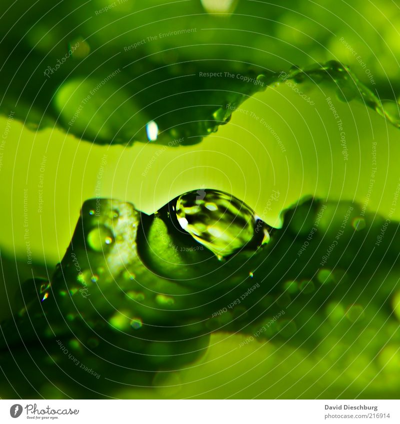 Nature Water Green Plant Leaf Calm Life Spring Rain Wet Drops of water Damp Dew Macro (Extreme close-up) Foliage plant Reflection