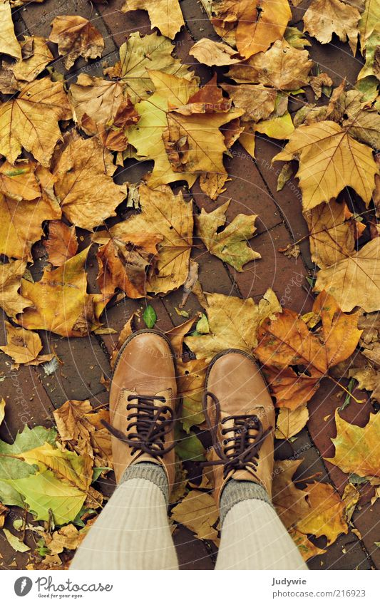 Höst Harmonious Well-being Human being Adults Legs Environment Nature Autumn Leaf Fashion Stockings Tights Boots Hiking boots Relaxation Stand Natural Yellow
