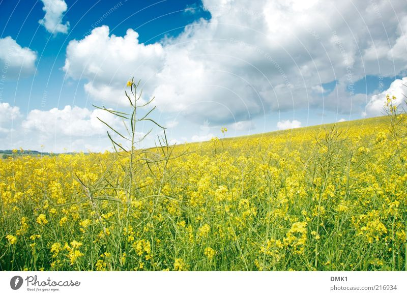 Nature Beautiful Plant Clouds Far-off places Yellow Environment Landscape Spring Blossom Horizon Time Weather Power Contentment Field