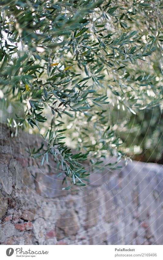 #A# Olive tree Art Esthetic Leaf Wall (barrier) Mediterranean Decent Beautiful Nature Italy Colour photo Multicoloured Exterior shot Close-up Detail