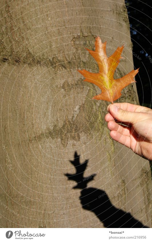 Show me the autumn! Hand 1 Human being Nature Autumn Beautiful weather Leaf Decoration Old Illuminate To dry up Natural Original Dry Brown Discover Transience