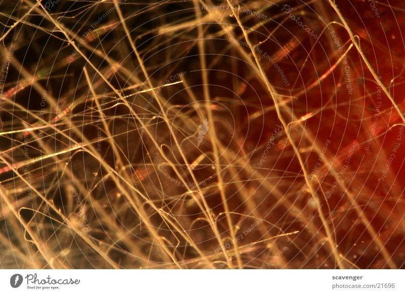 fibers Thread Style Thin Macro (Extreme close-up) Near Large Fine Yellow Dark Black Close-up Hair and hairstyles Bright