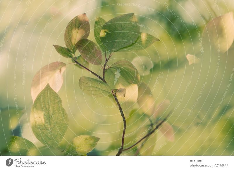 Nature Beautiful Green Leaf Yellow Autumn Bright Growth Change Transience Fantastic Natural Twig Autumn leaves Twigs and branches Autumnal