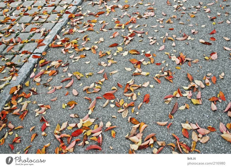 sweeping service Environment Nature Autumn Climate Wind flaked Stone Multicoloured Gray Transience Autumn leaves Autumnal Autumnal colours Sidewalk Asphalt Lie