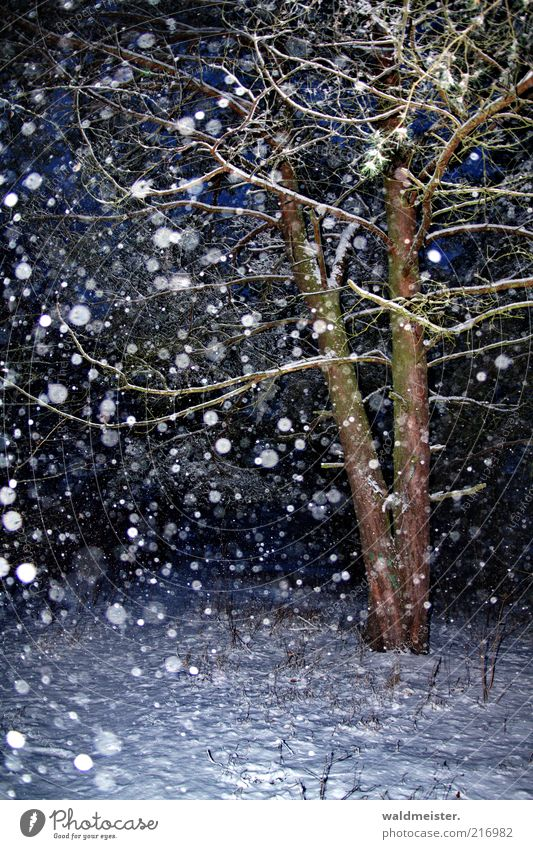 Christmas forest Nature Snow Snowfall Tree Forest Blue Brown Calm Snowflake Pine Colour photo Multicoloured Exterior shot Evening Night Flash photo Blur Winter
