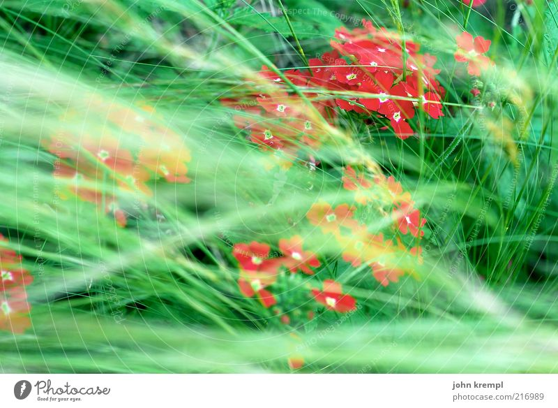 Nature Green Beautiful Red Plant Flower Environment Meadow Life Grass Blossom Contentment Wind Growth Blossoming Joie de vivre (Vitality)