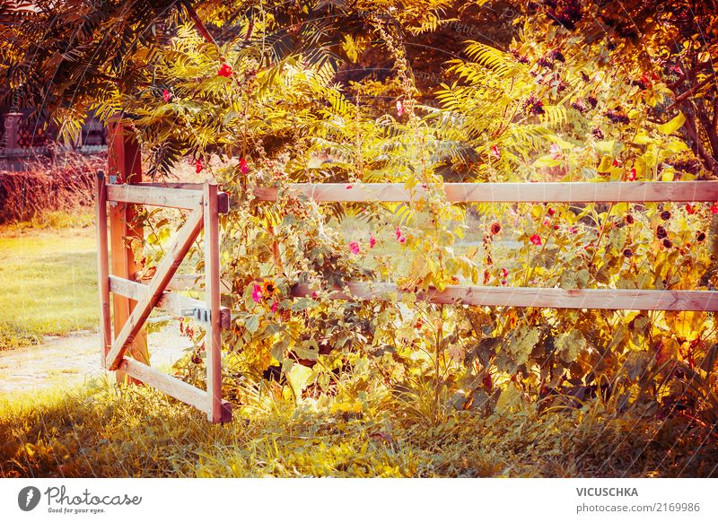 Nature Plant Summer Beautiful Tree Landscape Flower Leaf Yellow Lifestyle Blossom Autumn Grass Garden Design Park
