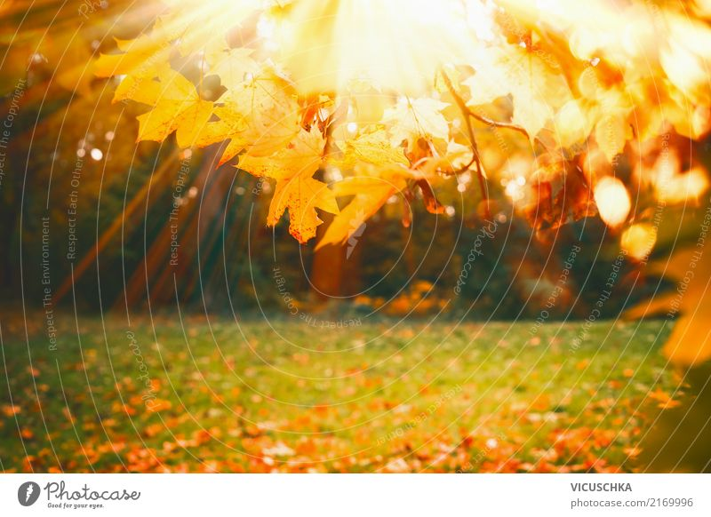 Nature Plant Sun Tree Leaf Yellow Lifestyle Autumn Background picture Grass Garden Park Beautiful weather Lawn