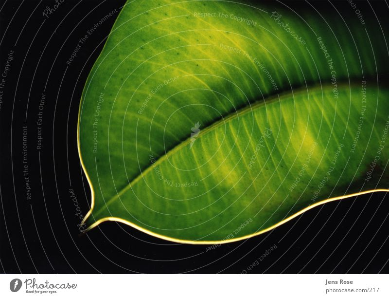 Nature Green Plant Leaf Organic produce Photosynthesis Macro (Extreme close-up)