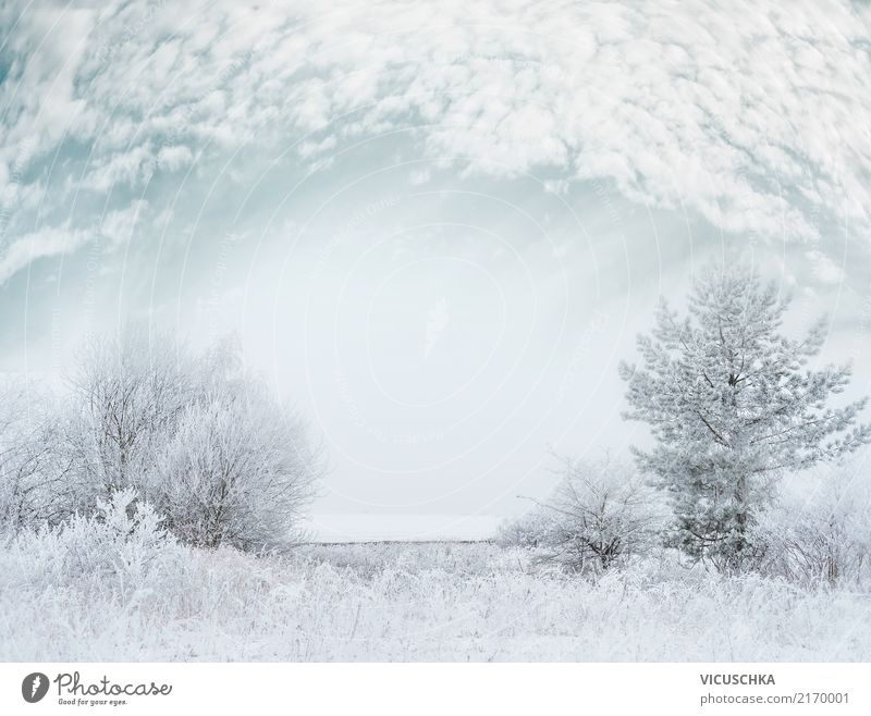 Winter landscape with snow Lifestyle Garden Christmas & Advent Nature Landscape Sky Gale Fog Snow Snowfall Tree Grass Bushes Park Background picture Snowstorm