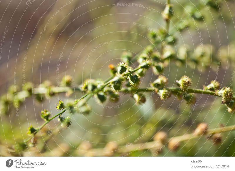 Nature Green Plant Environment Esthetic Bushes Landscape format