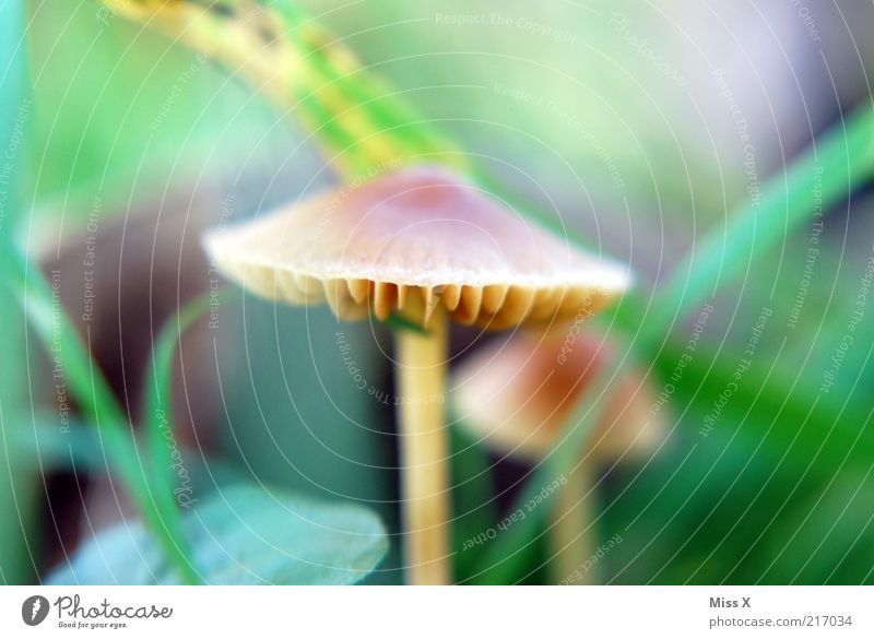 Nature Autumn Small Growth Mushroom Lamella Mushroom cap Autumnal