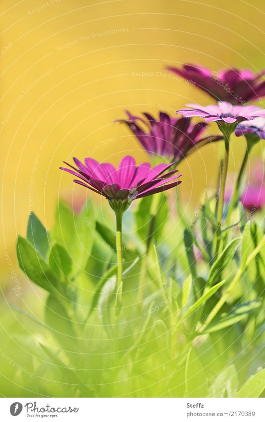 it used to be summer Nature Summer Beautiful weather Plant Flower Blossom Summerflower Summerflowerbed Garden plants Park Blossoming Warmth Yellow Green Violet