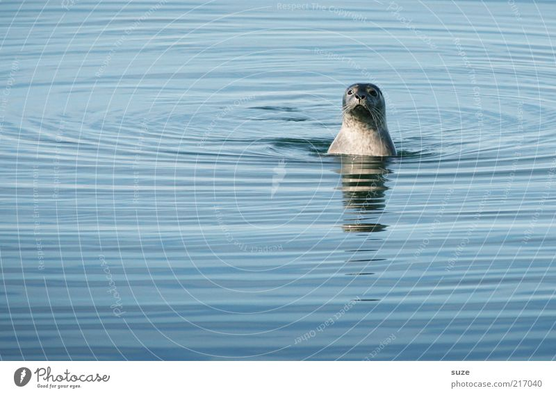 Nature Blue Water Ocean Animal Funny Head Exceptional Waves Wild Wild animal Authentic Cute Observe Curiosity Animal face