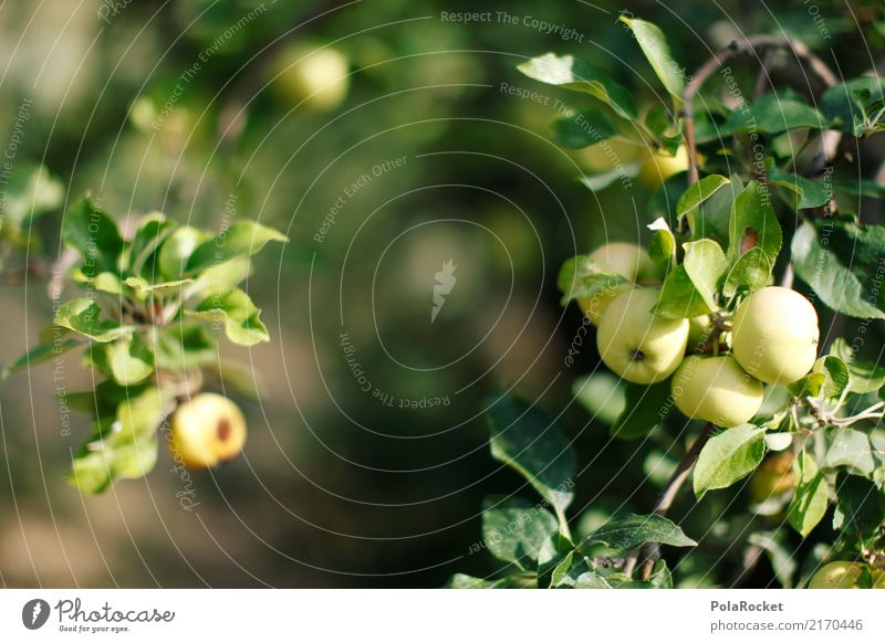 #A# Apple harvest Environment Nature Esthetic Apple tree Tree of knowledge Apple juice Apple pie Apple skin Apple puree Green Colour photo Multicoloured