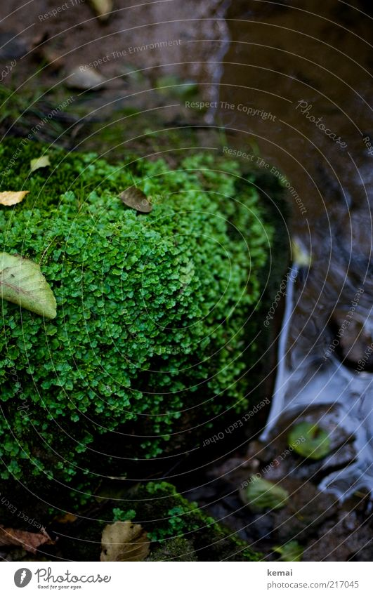Natural greenery Environment Nature Plant Earth Water Summer Autumn Moss Leaf Foliage plant Wild plant Brook River Stone Dark Wet Green Damp Cold Colour photo