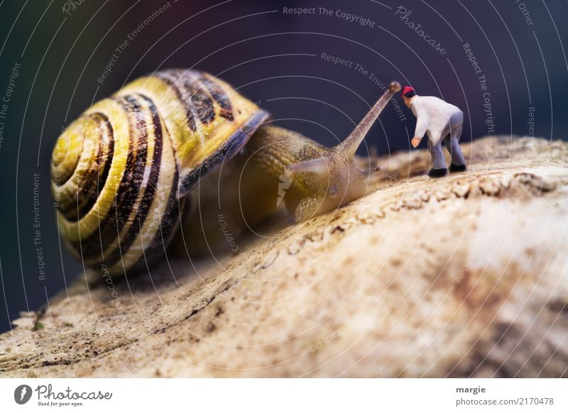 Minielten - Hey, you there! House (Residential Structure) To talk Human being Masculine Man Adults 1 Animal Wild animal Snail Brown Yellow Spiral Snail shell