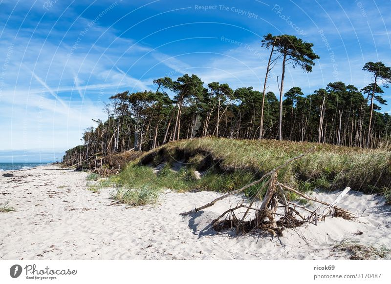 The west beach on the Fischland-Darß Relaxation Vacation & Travel Tourism Beach Ocean Waves Nature Landscape Clouds Tree Forest Coast Baltic Sea Blue Green