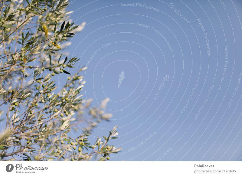#A# olive sky Nature Esthetic Olive Olive tree Olive grove Olive leaf Olive harvest Mediterranean Green Blue Italy Colour photo Exterior shot Experimental