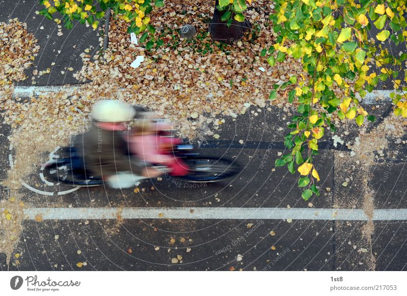 Human being Child Tree Leaf Street Autumn Movement Bicycle Masculine Speed Driving Under Traffic infrastructure Dynamics Vehicle Cycling
