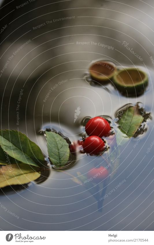 floating autumn fruits Environment Nature Plant Water Autumn Leaf Wild plant Berries Rose hip Park Swimming & Bathing Exceptional Uniqueness Small Wet Natural
