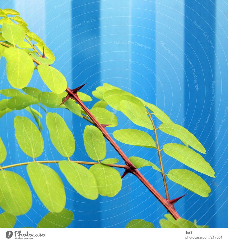 Plant Leaf Esthetic Branch Exceptional Twig Branchage Partially visible Section of image Thorn Light Detail Pattern Light blue Corrugated sheet iron