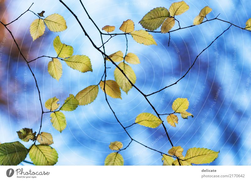 Sky Nature Plant Summer Tree Landscape Animal Leaf Forest Environment Blossom Autumn Spring Meadow Garden Dream