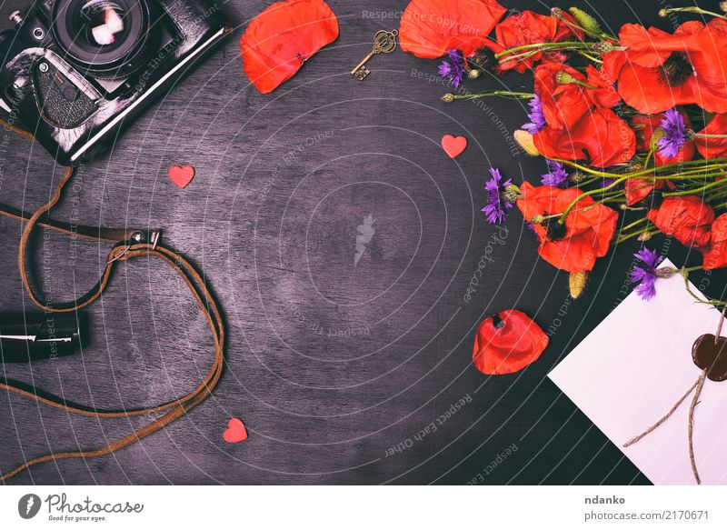 old vintage photo camera Beautiful Summer Camera Nature Plant Flower Leaf Blossom Bouquet Old Natural Retro Wild Green Red Black Colour film Equipment