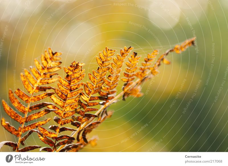 Autumn's Bokeh Nature Green Beautiful Plant Joy Environment Emotions Moody Gold Wild Natural Authentic Happiness Esthetic Uniqueness