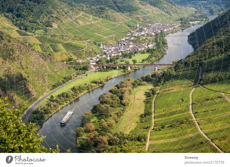 On the Moselle... Vacation & Travel Tourism Trip Nature Landscape Plant Water Summer Beautiful weather Tree Bushes Hill River Mosel (wine-growing area)