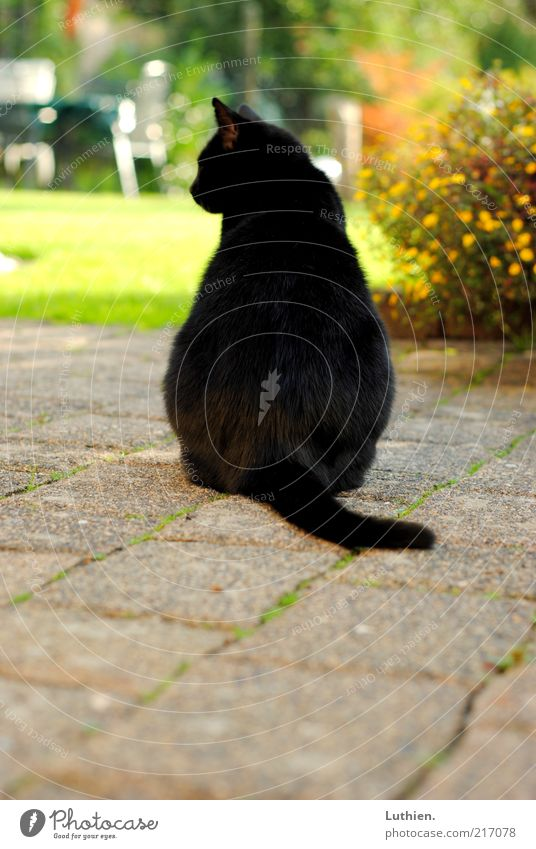 Nature Sun Green Black Animal Dream Cat Think Free Sit Observe Discover Beautiful weather Pet Paving stone Domestic cat