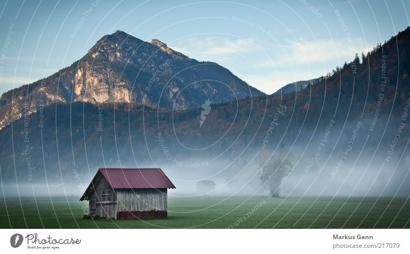 Hut in the foothills of the Alps Nature Landscape Autumn Weather Fog Tree Meadow Gray Germany Mountain Forest Dark Cold Morning Colour photo Exterior shot Dawn
