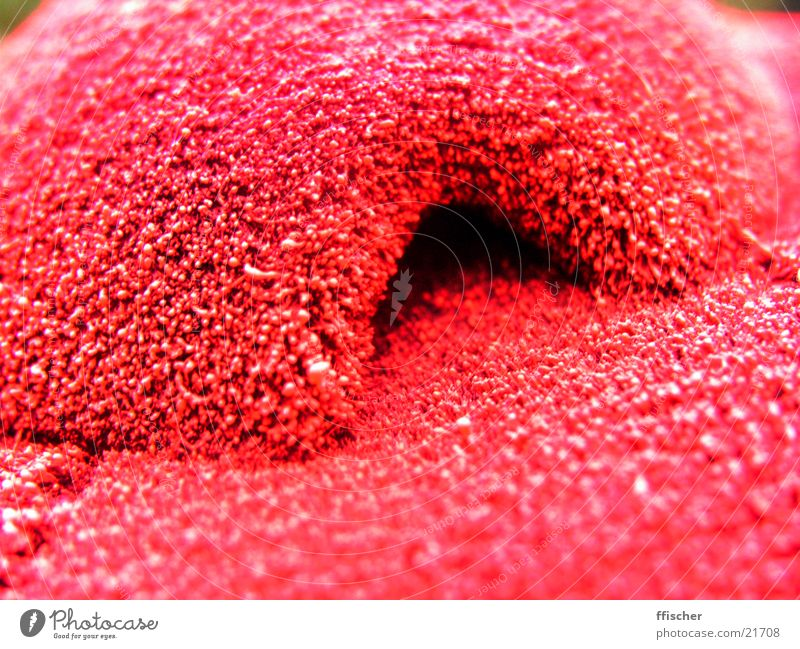 small, red cave Red Cave Riding hat Thread Obscure Macro (Extreme close-up) Detail Close-up Modding