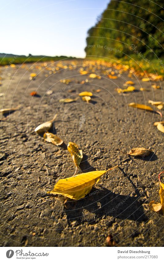 Nature Green Tree Plant Leaf Far-off places Landscape Yellow Autumn Lanes & trails Brown Earth Lie Change Beautiful weather Transience