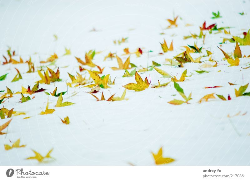 winter butterflies Winter Snow Nature Autumn Leaf Yellow Gold Green White Autumn leaves Winter mood Winter's day Point Sharp-edged Cold Bright leaf fall