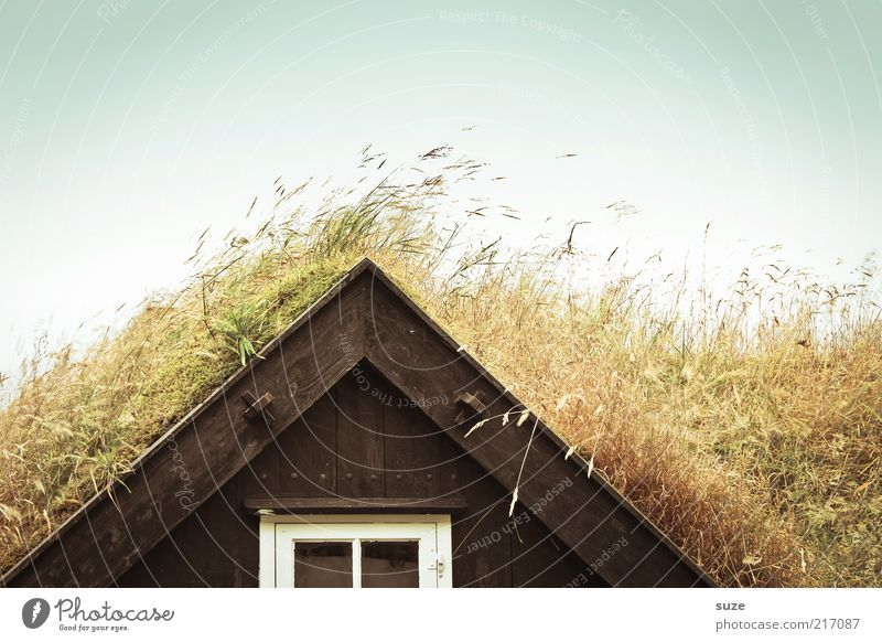 Full Grass Living or residing Flat (apartment) House (Residential Structure) Environment Nature Sky Cloudless sky Meadow Hut Window Roof Funny Sustainability