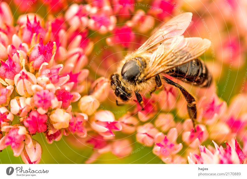 Nature Plant Beautiful Green Animal Blossom Background picture Germany Pink Illuminate Wild animal Romance Insect Bee Blossom leave Pollen